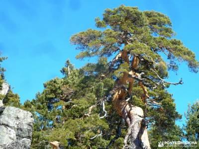 Peña Águila–Valle de la Fuenfría; viajes a tu aire concierto de las velas pedraza viajes grupos